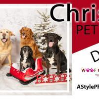 Christmas Pet Photo Day Woof Gang Bakery Hamlin