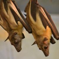 Celebrate Bats